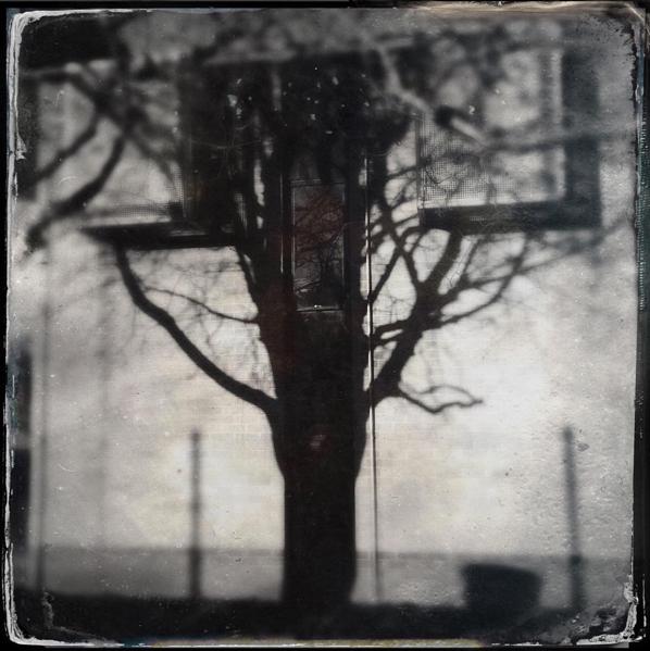 Wantagetree